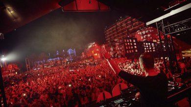 Ants Ibiza